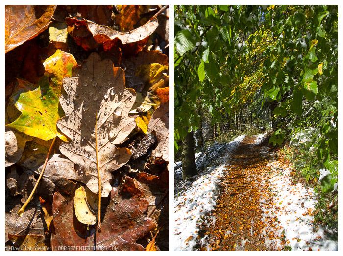 Herbstwanderung Freiburg (16)