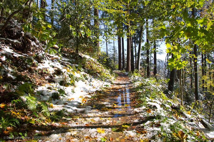 Herbstwanderung Freiburg (19)