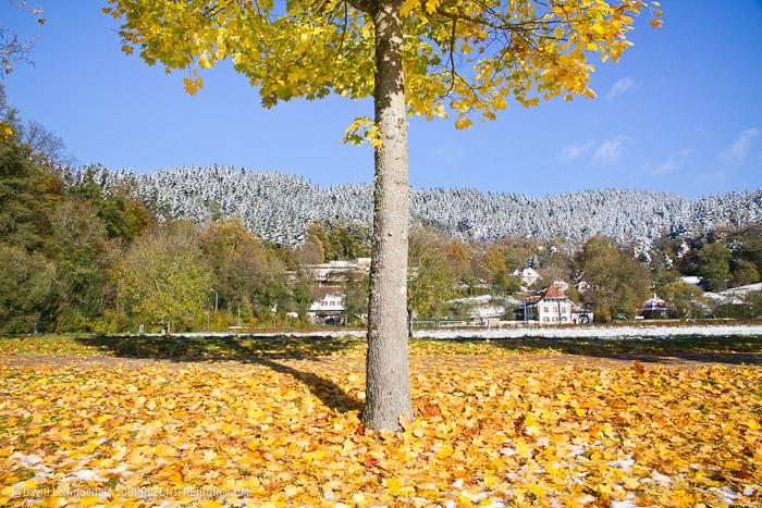 Herbstwanderung Freiburg (2)
