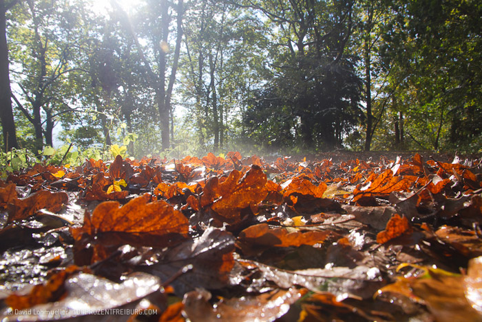 Herbstwanderung Freiburg (25)