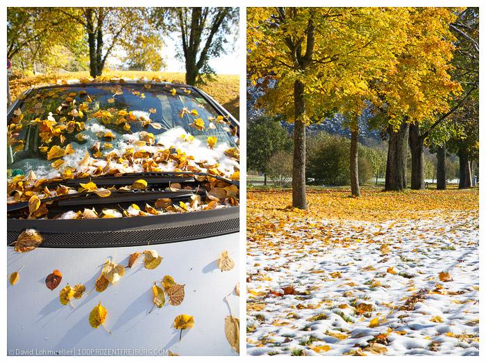 Herbstwanderung Freiburg (3)