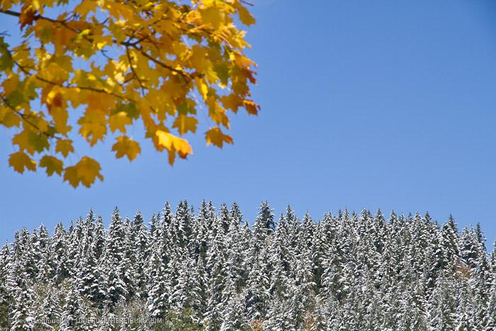 Herbstwanderung Freiburg (4)
