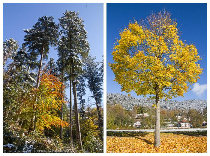 Herbstwanderung Freiburg (5)