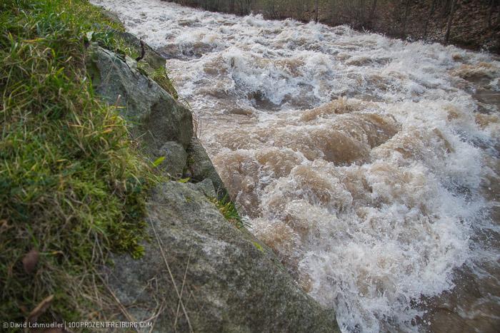 Freiburg Hochwasser (15)