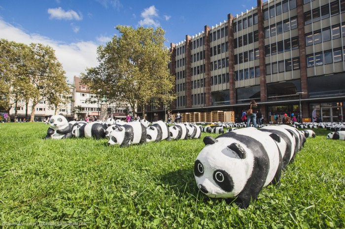 Pandas in Freiburg (4)