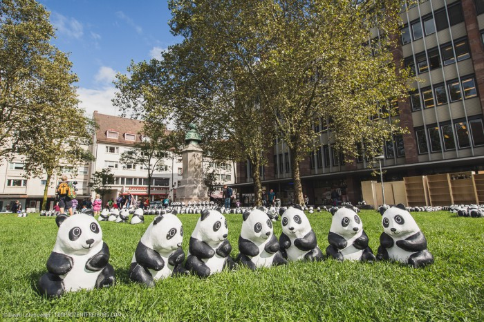 Pandas in Freiburg (2)
