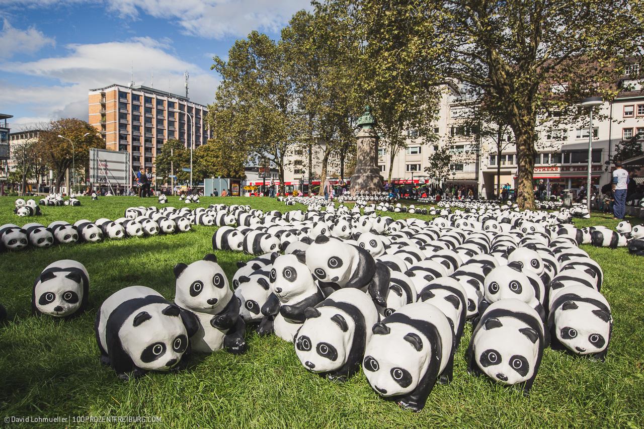 Pandas in Freiburg