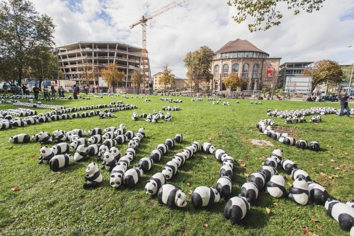 Pandas in Freiburg (3)