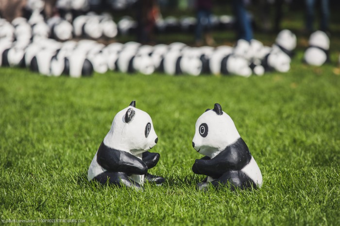 Pandas in Freiburg (9)