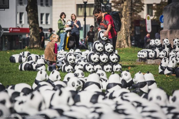 Pandas in Freiburg (11)