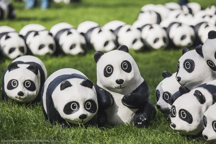 Pandas in Freiburg (12)