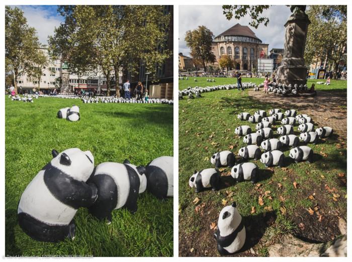 Pandas in Freiburg (6)