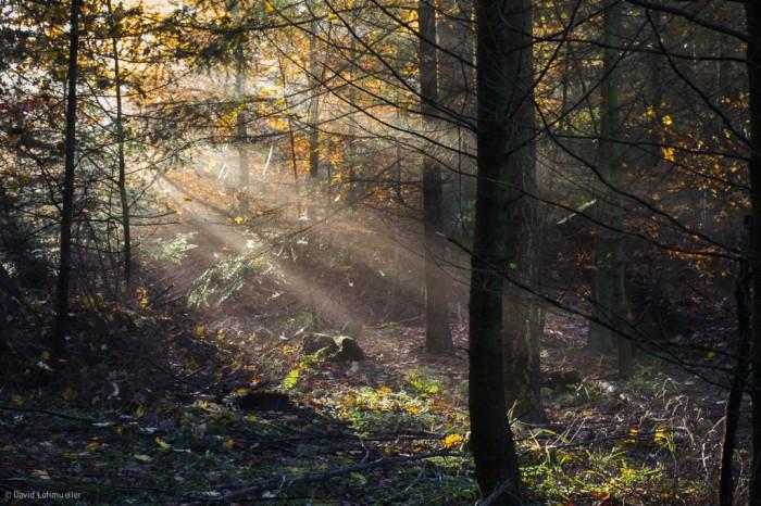 Unterwegs im Schwarzwald (1)