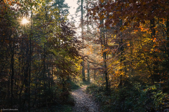 Schwarzwald (23)