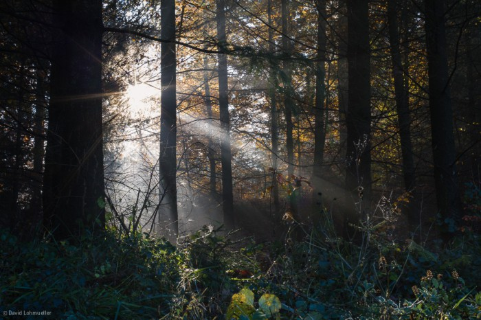 Schwarzwald (18)