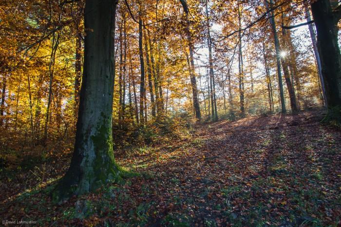 Schwarzwald (15)