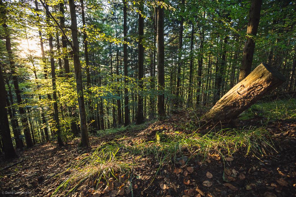 Aufbäumen: Unser Blog  wird CO2-neutral.