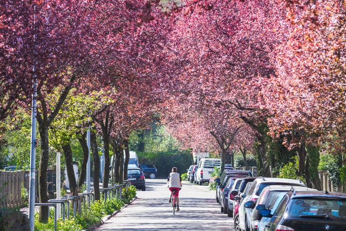 Frühling in Freiburg